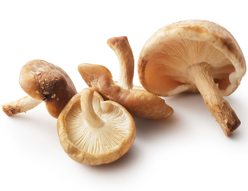 MUSHROOM ESSENTIALS: MYCOTHERAPY FOR THE HEALTH PROFESSIONAL 4-PART LIVE WEBINAR SERIES